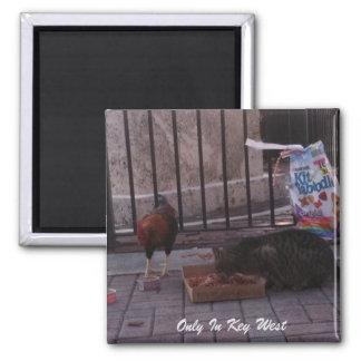 """Only In Key West"" Cat & Rooster Magnet"