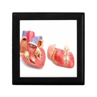 Open model of human heart showing inside.jpg small square gift box