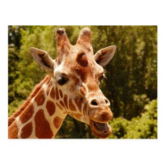 Open mouth Giraffe postcard