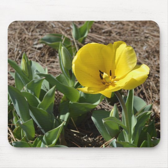 Opened Yellow Daffodil Mouse Mat