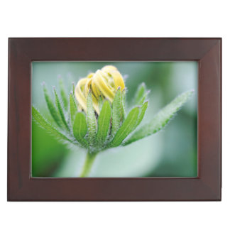 Opening Flower Of Cone Flower Keepsake Box