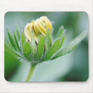 Opening Flower Of Cone Flower Mouse Pad