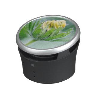 Opening Flower Of Cone Flower Speaker