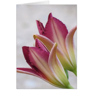 Opening Petals - Daylilies Greeting Card