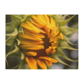 Opening Sunflower Wood Canvas
