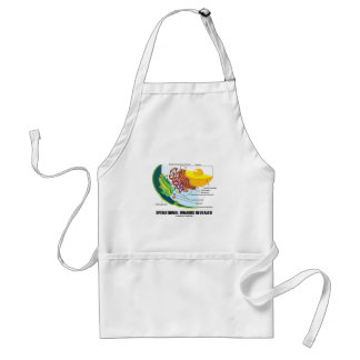 Operational Innards Revealed (Cell Biology) Adult Apron