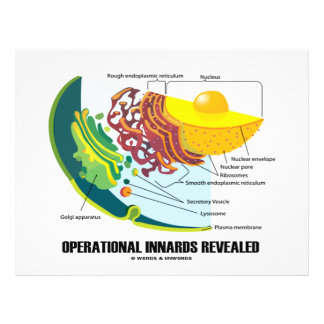Operational Innards Revealed (Cell Biology) 21.5 Cm X 28 Cm Flyer