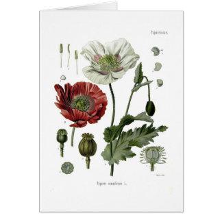 Opium poppy card