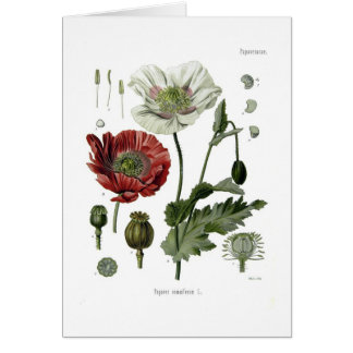 Opium poppy greeting card