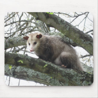 Opossum in a Tree Mousepad
