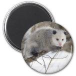 Opossum Love 6 Cm Round Magnet