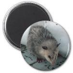opossum magnet