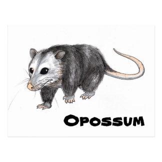 Opossum Postcard