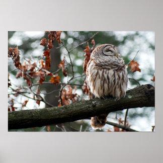 Optimistic Owl Poster