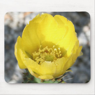 Opuntia Ficus-Indica Prickly Pear Flower Mousepad