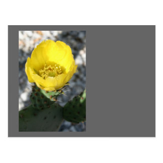 Opuntia Ficus-Indica Prickly Pear Flower Postcard