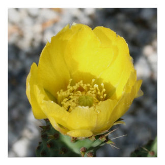 Opuntia Ficus-Indica Prickly Pear Flower Posters