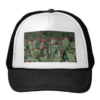 Opuntia Fruits Trucker Hat