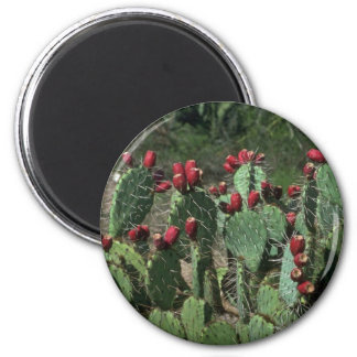 Opuntia Fruits Magnets