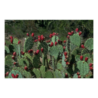 Opuntia Fruits Poster