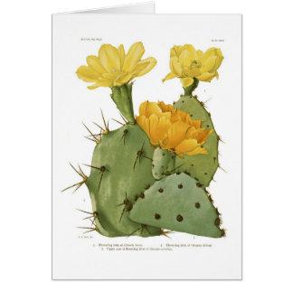 Opuntias Greeting Card
