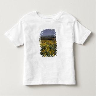OR, Columbia River Gorge, Rowena Plateau, Tom Shirts
