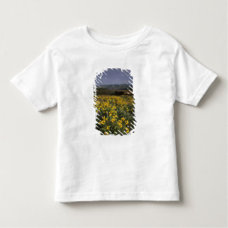 OR, Columbia River Gorge, Rowena Plateau, Tom Toddler T-Shirt