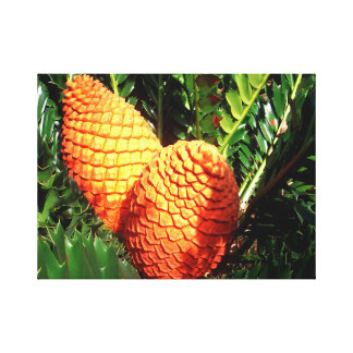 Orange African Pine Seed Cones, Canvas Print