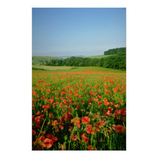 Orange Agricultural poppy field, Falmer Poster