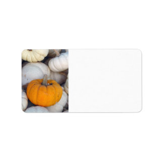 Orange among white pumpkins label