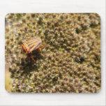 Orange and Black Beetle Mouse Pad Mousepad