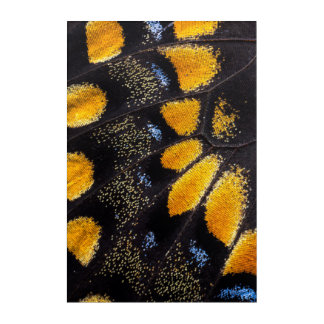 Orange and black butterfly wing acrylic print