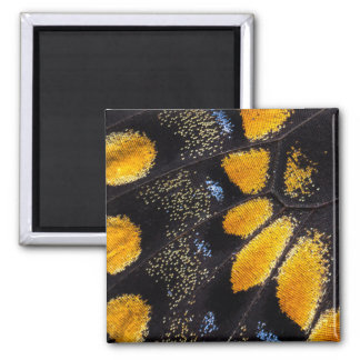 Orange and black butterfly wing square magnet