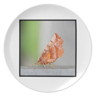 Orange and Brown Moth. Plate