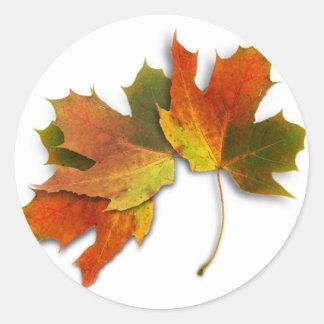 Orange And Golden  Autumn Leaves Classic Round Sticker