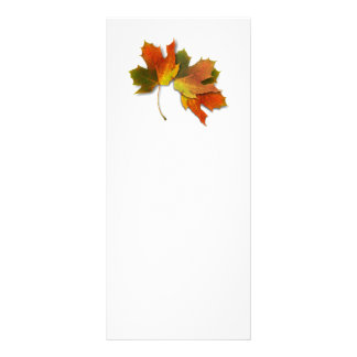 Orange And Golden  Autumn Leaves Full Color Rack Card