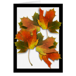 Orange And Golden  Autumn Leaves Greeting Card