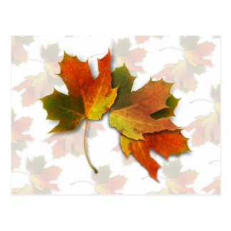 Orange And Golden  Autumn Leaves Postcard