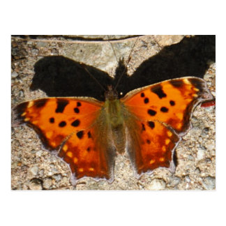 Orange and green butterfly postcards