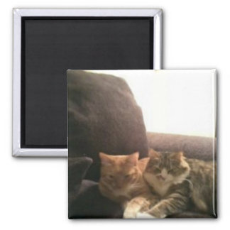 Orange and Grey/White Tabby Cats Square Magnet