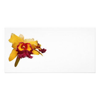 Orange and Magenta Orchid Photo Cards
