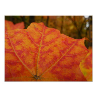 Orange and Red Maple Leaf Abstract Autumn Nature Poster