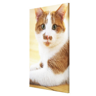 orange and white cat looking at camera canvas print