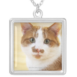 orange and white cat looking at camera silver plated necklace