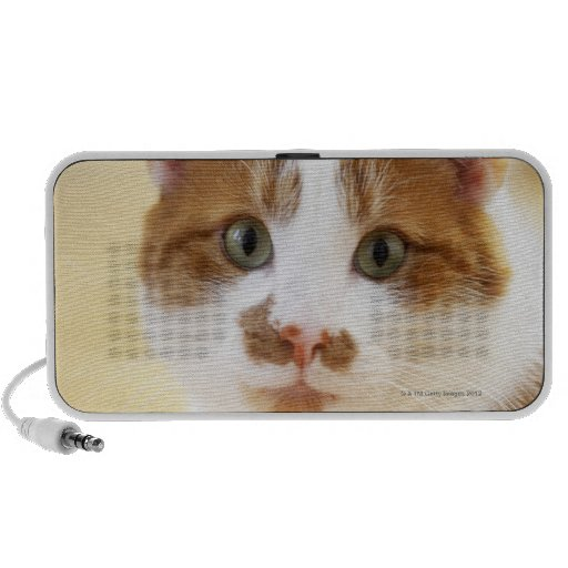 orange and white cat looking at camera PC speakers