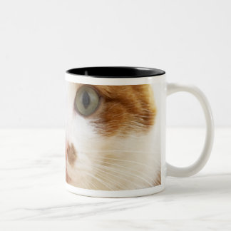 orange and white cat looking at camera Two-Tone coffee mug