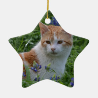 Orange and White Tabby Ceramic Star Decoration
