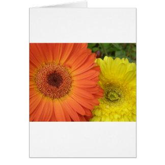 Orange and Yellow Crysanthemum Greeting Cards