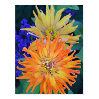 Orange and yellow dahlia flowers postcard