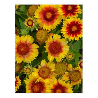 Orange and yellow echinacea flower print postcard